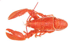 Isolated lobster Stock Photo