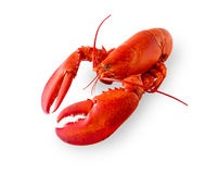 Isolated Lobster On White Royalty Free Stock Image