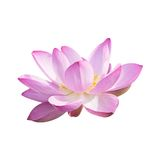 Isolated Lotus with a clipping path Stock Photo