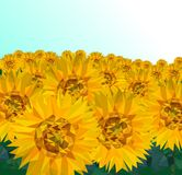 Low poly Sunflower field with blue sky, Nature geometric concept,Abstract vector royalty free illustration