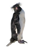 Isolated macaroni penguin Stock Photos
