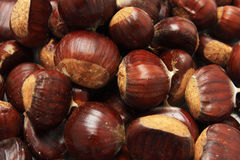 Isolated macro image of raw chestnuts Stock Photos