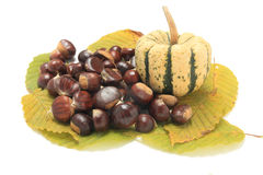 Isolated macro image of raw chestnuts and pumpkin Royalty Free Stock Images