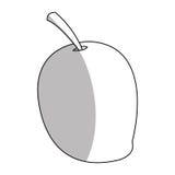 Isolated mango design Royalty Free Stock Photo