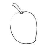 Isolated mango design Stock Photo