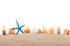 Isolated marine star  and  seashell Royalty Free Stock Image