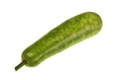 Isolated marrow squash. Isolated green marrow squash, vietnam royalty free stock photography
