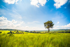 Isolated in a meadow Stock Photography