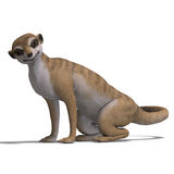 Isolated meerkat Stock Photography
