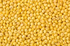 Millet. Isolated millet on White Background stock photography