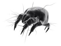 Isolated mite Royalty Free Stock Photography
