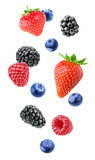 Isolated mixed berries Stock Image