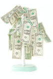 Isolated Money Growing on Tree. US One Dollar bills are hanging from its branches royalty free stock photo