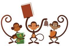 Isolated monkey Royalty Free Stock Images
