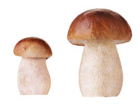Isolated mushrooms Stock Photography