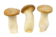 Isolated mushrooms Stock Images