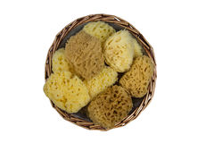Isolated Natural Sea Sponges Stock Photography