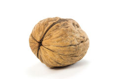 Isolated Natural Walnuts Stock Image