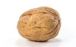 Isolated Natural Walnuts Royalty Free Stock Photos