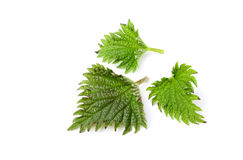 Isolated nettle leaves closeup. Royalty Free Stock Images