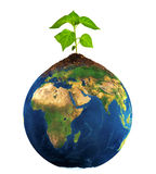 Isolated new plant on earth. Isolated image of green plant on earth Royalty Free Stock Photo
