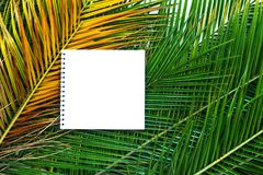 Isolated note book on tropical palm leaves branch Royalty Free Stock Photo