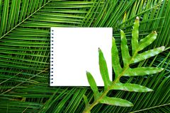 Isolated note book on tropical palm leaves branch Stock Images