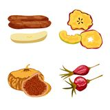 Isolated object of fruit and dried  icon. Set of fruit and food  vector icon for stock. Vector design of fruit and dried  symbol. Collection of fruit and food stock illustration
