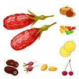 Vector illustration of fruit and dried  symbol. Collection of fruit and food  stock vector illustration. Isolated object of fruit and dried  sign. Set of fruit vector illustration