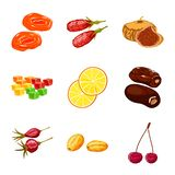 Vector illustration of fruit and dried  symbol. Collection of fruit and food  vector icon for stock. Isolated object of fruit and dried  sign. Set of fruit and royalty free illustration