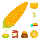 Vector illustration of maize and food sign. Collection of maize and crop stock symbol for web. Isolated object of maize and food logo. Set of maize and crop vector illustration