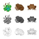 Isolated object of wildlife and bog icon. Set of wildlife and reptile stock vector illustration. Vector design of wildlife and bog symbol. Collection of royalty free illustration
