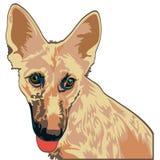 Yellow dog shepherd. Isolated object of yellow shepherd Stock Photo
