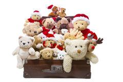 Isolated old teddy bears in a an old suitcase isolated - christm Royalty Free Stock Image