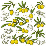 Isolated olive branches set Stock Images