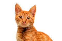 Isolated Orange Cat Stock Images