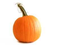 Isolated Orange Pumpkin Stock Images
