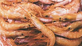 Isolated orange shrimp on ice background on the market, closeup of fresh crustacean products in restaurant, useful shellfish sea. Food, group frozen seafood royalty free stock photography