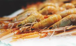 Isolated orange shrimp on ice background on the market, closeup of fresh crustacean products in restaurant, useful shellfish sea stock photos