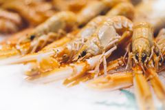 Isolated orange shrimp on ice background on the market, closeup of fresh crustacean products in restaurant, useful shellfish sea. Food, group frozen seafood royalty free stock photos