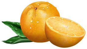 Isolated oranges. Isolated orange and cross section decorated with leaf, isolated over white background royalty free illustration