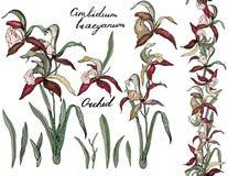 Isolated orchid cimbidium on white. Stock Photo