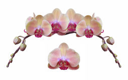Isolated Orchid Design Header stock photo