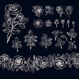 Isolated outline rose elements on dark background. Seamless brush made of rose buds and leaves. Chalk. vector illustration