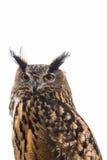 Isolated Owl Royalty Free Stock Photo