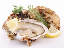 Isolated oyster Royalty Free Stock Photography