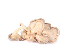 Isolated oyster mushrooms Royalty Free Stock Photo