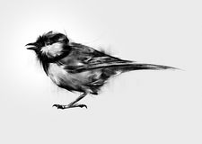 Isolated painted bird tit vector illustration