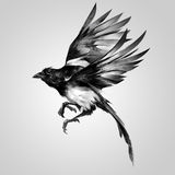 Isolated painted realistic sketch magpie in flight royalty free illustration