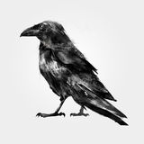 Isolated painted sitting bird Raven Royalty Free Stock Photo